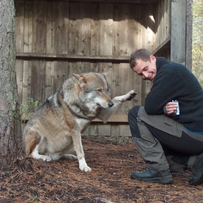 Tommy og ulv